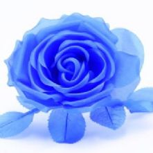 61/2 Royal Blue Silk Rose